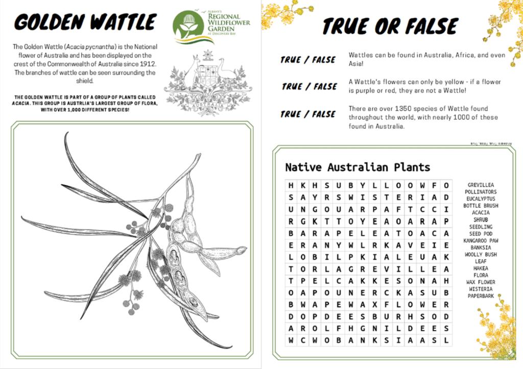 Wattle activity sheet