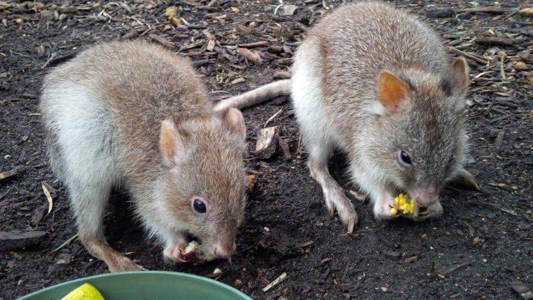 Australian Wildlife Park