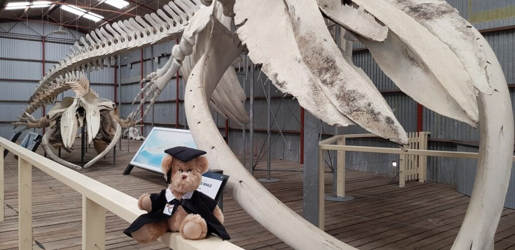 Children's University mascot exploring the Historic Whaling Station.
