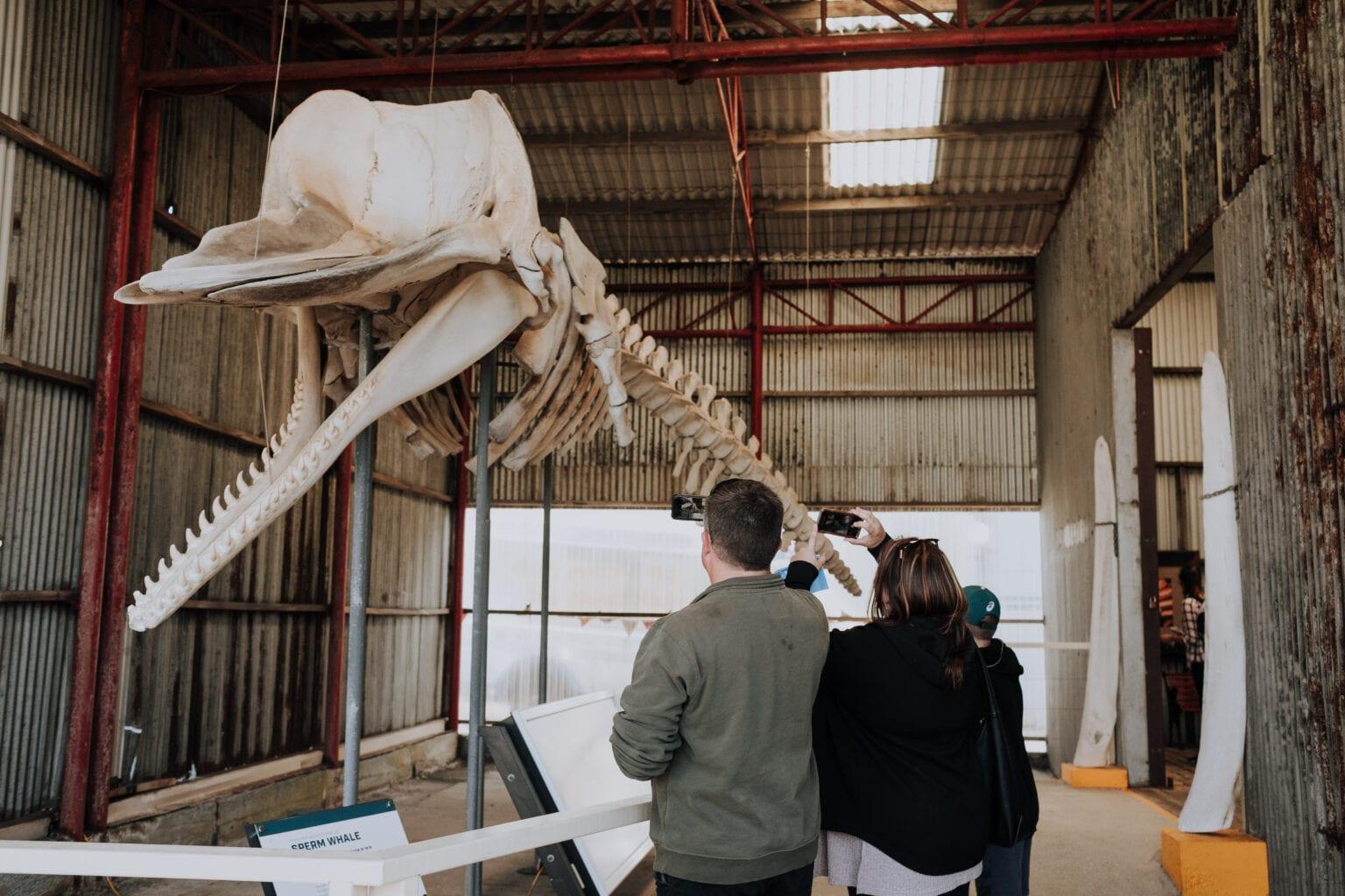 Skeleton Shed