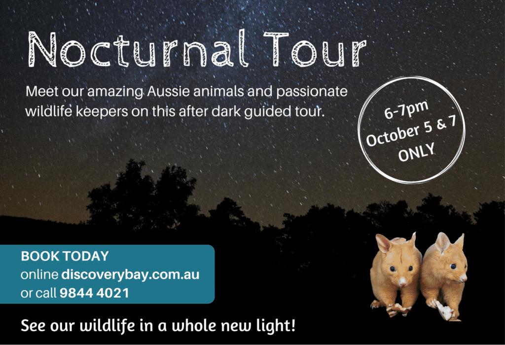 Nocturnal Wildlife Tour